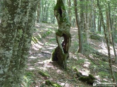 Sedano,Loras-Cañones Ebro,Rudrón;bosques en madrid toledo nocturno ropa tecnica de montaña mapa p